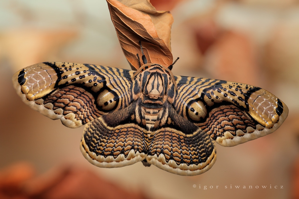 Macro-Photographs-of-Insects-by-Igor-Siwanowicz-19